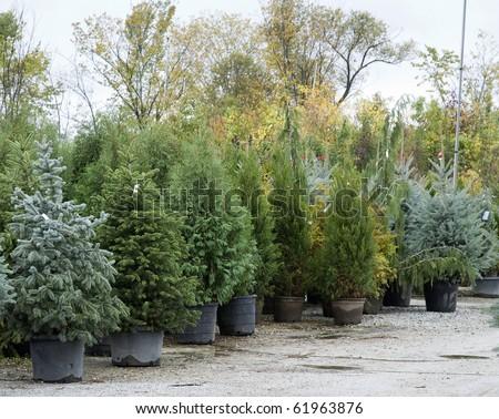 autumn tree farm on a rainy day - stock photo
