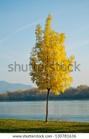 Autumn Tree in front of River Danube - stock photo