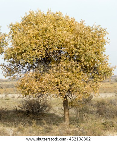 autumn tree in nature - stock photo