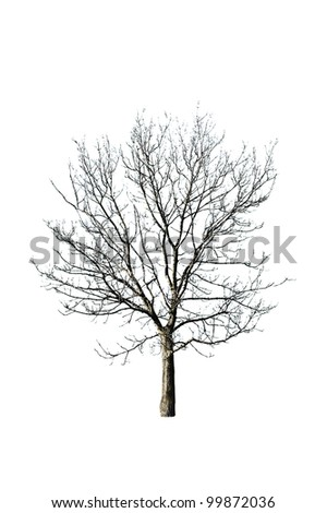 autumn tree isolated on white