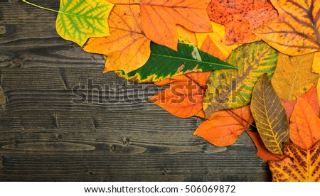 autumn tree leaf over dark wood plate background