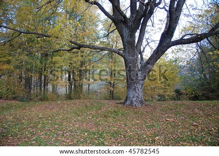 Autumn tree surrounded by fallen leaves - stock photo