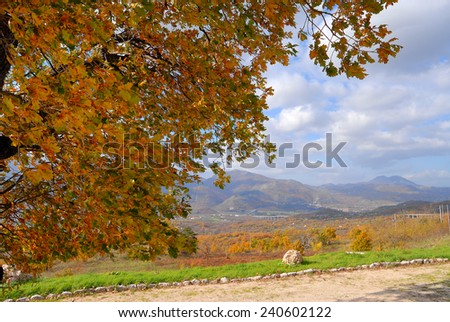 Autumn tree with blue sky and clouds in Lago Laceno, Avellino, Campania, Italy - stock photo
