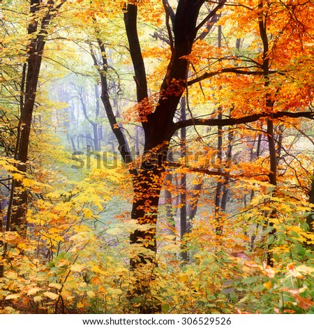 Autumn tree with colorful leaves in forest. Abstract natural background