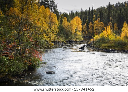 Autumn trees and devios river at conservation area