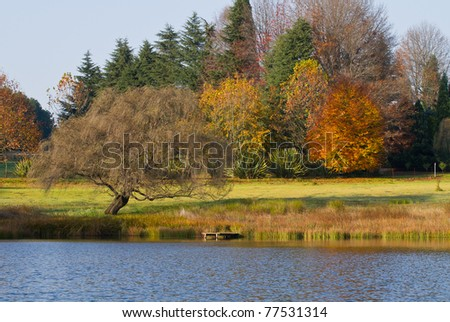 autumn trees and small dam