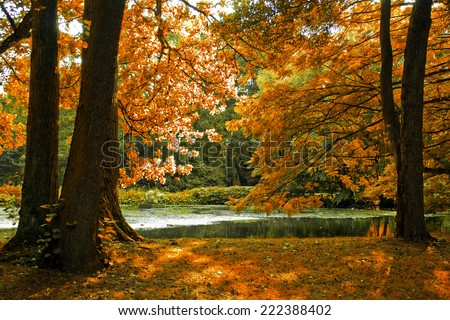 autumn trees at lake