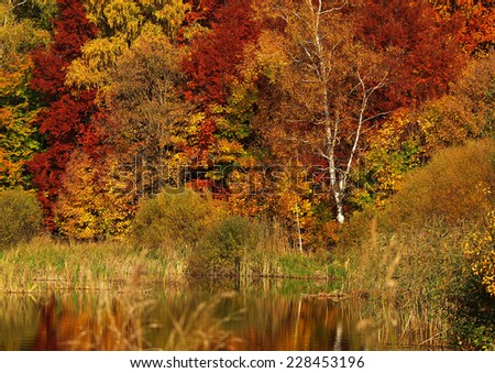 Autumn trees at the lake - stock photo