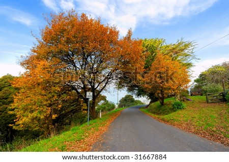 Autumn trees beside road