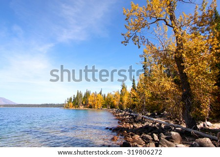 Autumn trees by Jackson lake in Wyoming - stock photo