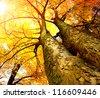Autumn Trees.Fall - stock photo