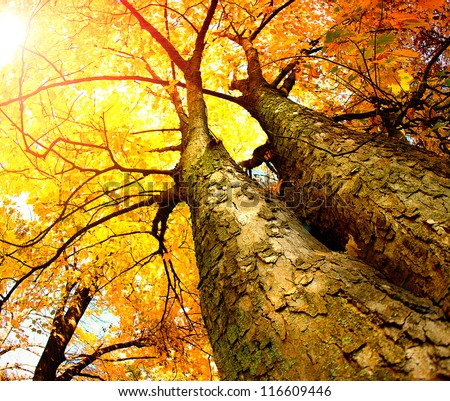 Autumn Trees.Fall - stock photo