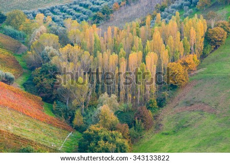 Autumn trees forming a heart shape  - stock photo