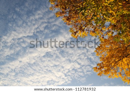 Autumn trees in a forest and blue sky with sun