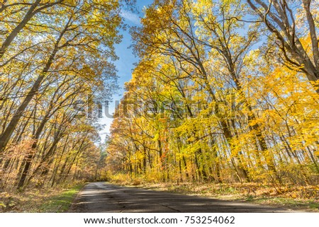 Autumn trees in sunbeams, an autumn landscape