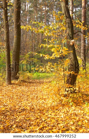 Autumn trees in the forest covered with golden leaves