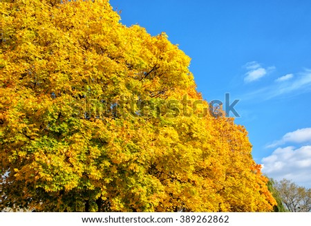 autumn trees in the park. Yellow and green