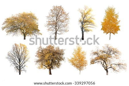 autumn trees isolated on white background  - stock photo