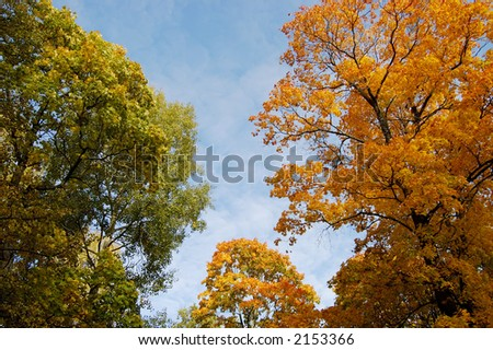 Autumn trees on a background of the blue sky