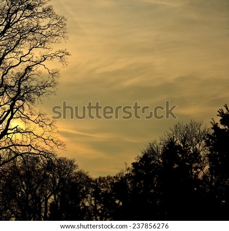 Autumn trees on sunset / Crossed Branches / Trees silhouette  - stock photo