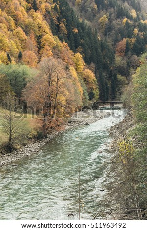 Autumn trees on the banks of a mountain river