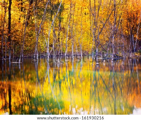 Autumn trees reflected in the water of a lake - stock photo