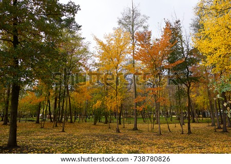 autumn trees, warm autumn, yellow leaves, park.