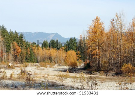Autumn view of dry riverbed and forest.