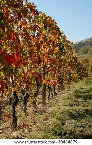 Autumn vineyard hill after grape harvest - stock photo