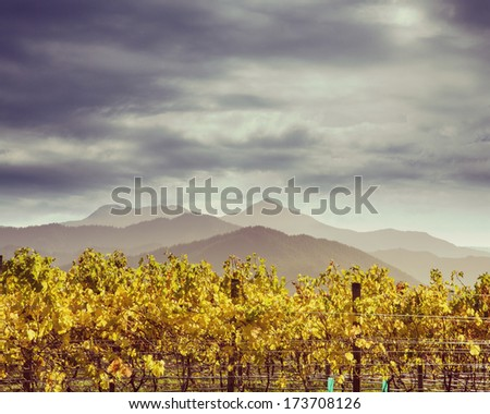 Autumn vineyard in New Zealand with an instagram effect. - stock photo