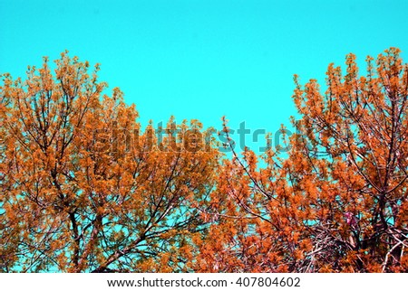 autumn vintage tree branch with green leaves