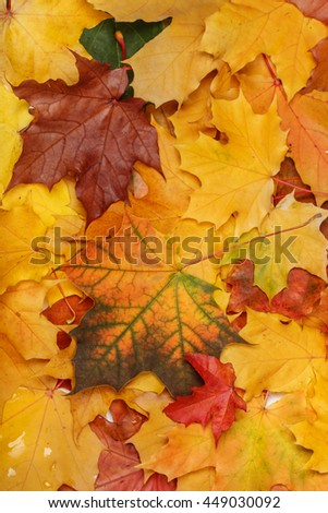 Autumn wet leaves after rain background - stock photo