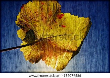 Autumn wine leaf closeup and sky blue in a vintage style - stock photo
