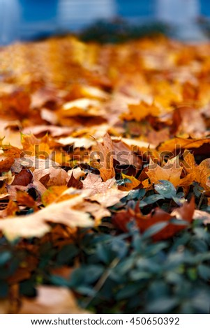 autumn with red leaves - stock photo
