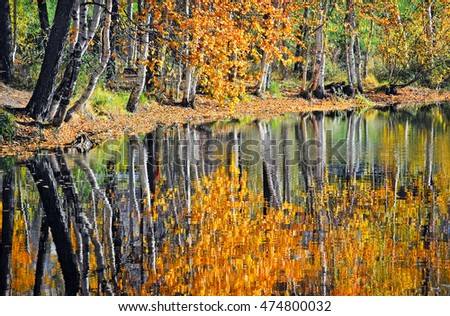 Autumn wood with the yellow foliage, reflected in lake