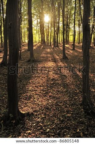Autumn woodland - stock photo