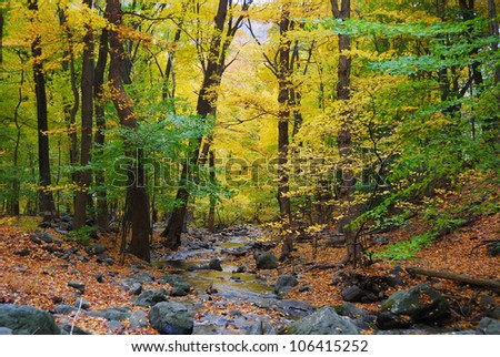 Autumn woods with yellow maple trees and creek with rocks and foliage in mountain. - stock photo