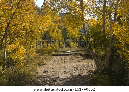 Autumn yellow aspens arch over a rocky path in the Colorado Rocky Mountains - stock photo