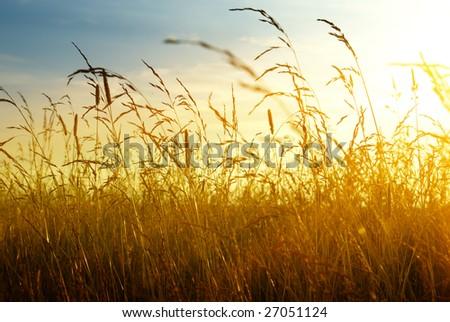 autumn yellow grass and sunset - stock photo