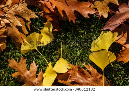Autumn yellow leafs and green grass like frame for design