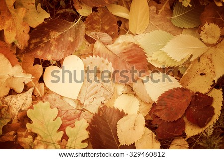 Autumn, yellow leaves, little heart - stock photo