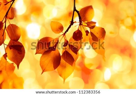 autumn yellow leaves, shallow focus - stock photo