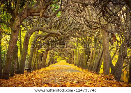 Autumnal alley in the park of Gdansk, Poland - stock photo