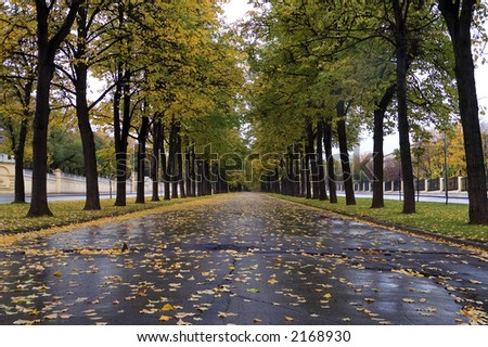 Autumnal alley of linden at rainy weather - stock photo