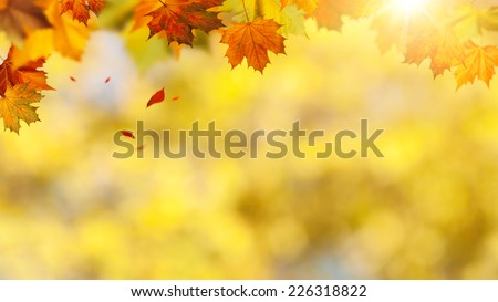 Autumnal banner with falling leaves for your design - stock photo