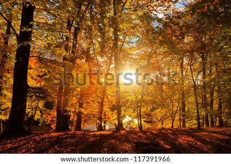 Autumnal beech wood in the district Uckermark in northeast Germany in the light of the dawn - stock photo