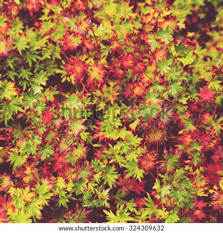 Autumnal fall. Abstract seasonal backgrounds  - stock photo