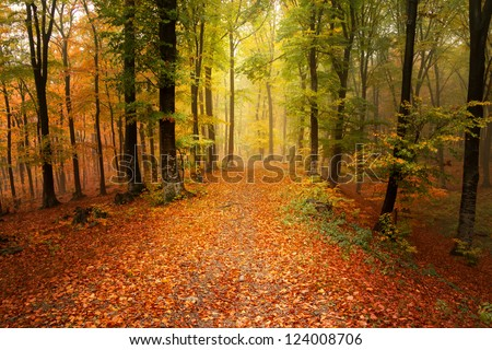 Autumnal foggy day in the forest - stock photo