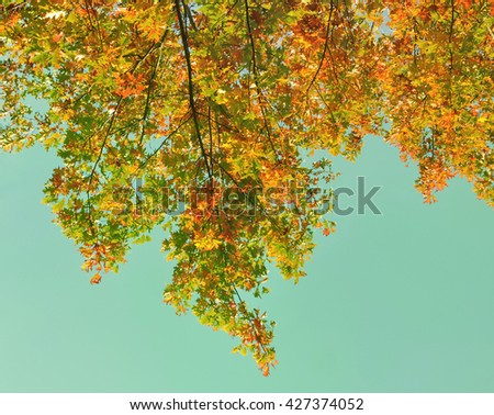autumnal foliage of a tree on blue  background - stock photo