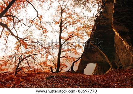 Autumnal forest in Switzerland - stock photo